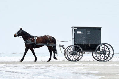 Animals Royalty-Free and Rights-Managed Images - Amish Horse and Buggy 0403 by Michael Peychich