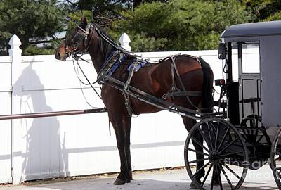 Photograph - Amish Horse And Buggy In Lancaster County, Pennsylvania by Polly Peacock