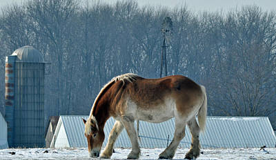 Indiana Winters Photograph - Amish Horse by Maria Suhr