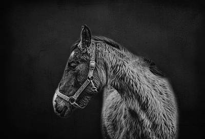Amish Horse Portrait Art Print by SharaLee Art