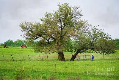 Amish Photograph - Amish Man And Tree by David Arment
