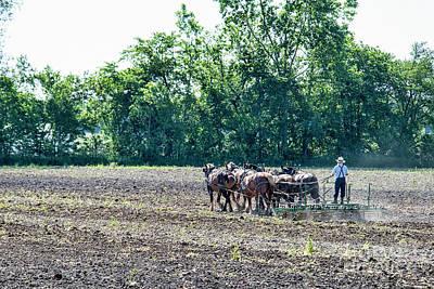 Photograph - Amish Man Disking by David Arment