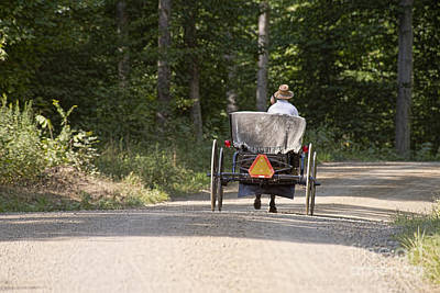 Amish Photograph - Amish Man In Open Buggy Holmes County by David Arment