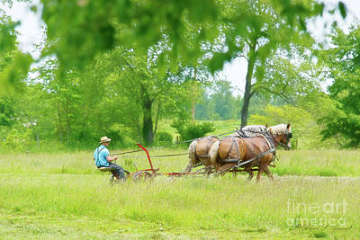 Photograph - Amish Man Mowing Hay by David Arment