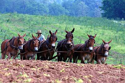 Amish Plowing The Fields With Mules Original by Randy Matthews