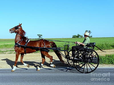 Photograph - Amish Transportation by Ed Weidman