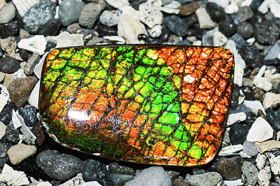 Ammolite Photograph - Ammolite Wishes by Troy Q Nelson
