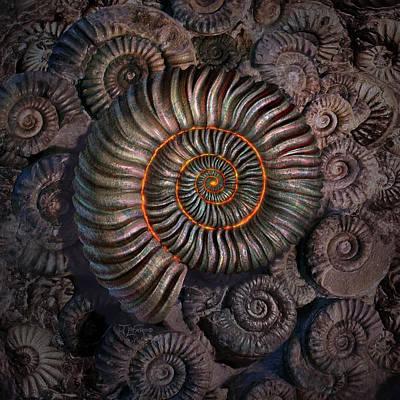 Texture Digital Art - Ammonite 1 by Jerry LoFaro