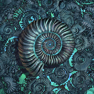 Ammonite 3 Art Print