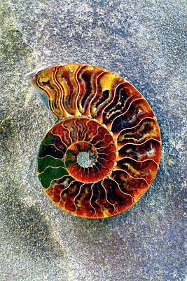 Photograph - Ammonite Fossil - 8305 by Paul W Faust - Impressions of Light