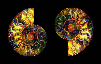 Photograph - Ammonite Fossil - Triptych-2 by Paul W Faust - Impressions of Light