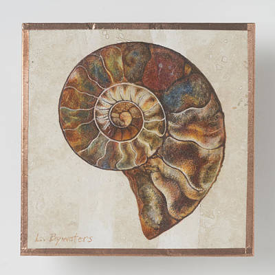Fossil Drawing - Before Fibonacci by Lynn Bywaters