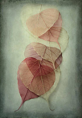 Fall Leaves Photograph - Among Shades by Maggie Terlecki