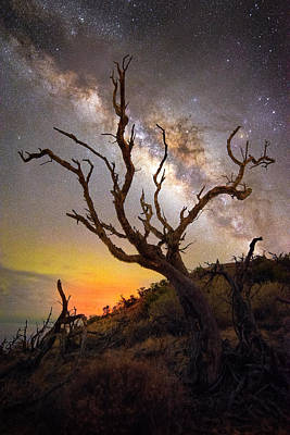 Photograph - Among The Ancients by James Roemmling