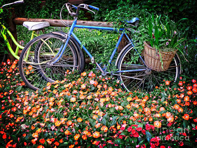 Baskets Photograph - Among The Flowers by Edward Fielding