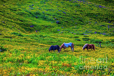 Photograph - Among The Flowers by Rick Bragan