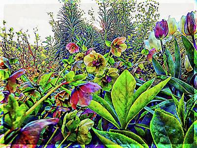 Photograph - Among The Hellebores by Dorothy Berry-Lound
