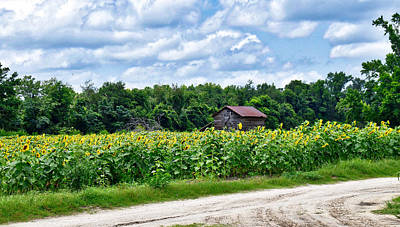 Photograph - Among The Sunflowers by Linda Brown