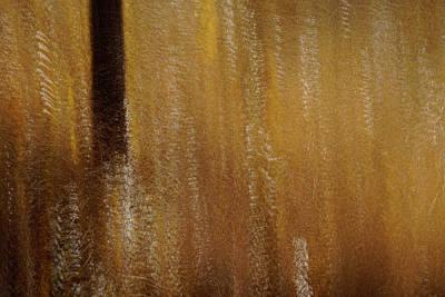 Photograph - Amongst The Brush by Deborah Hughes