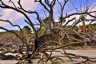 Photograph - Amongst The Driftwood  by Lisa Wooten
