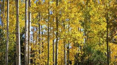 Photograph - Amongst The Fall Colors  by Saija Lehtonen