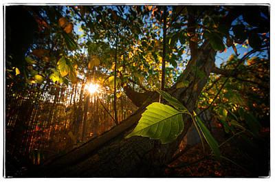 Photograph - Amongst The Fall by Tim Nichols