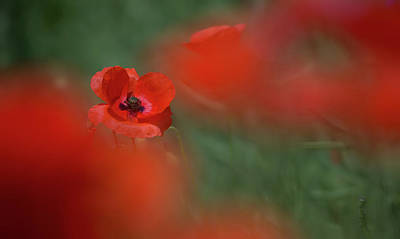 Photograph - Amongst The Red by Peter Walkden