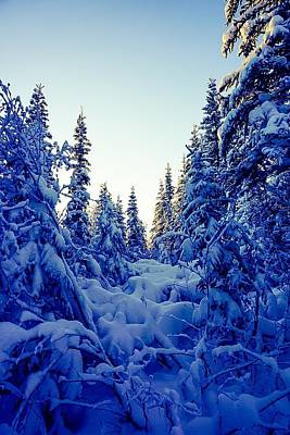 Photograph - Amongst The Trees And Snow - Inuvik by Desmond Raymond