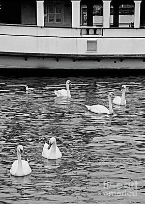 Photograph - Amsterdam Netherlands Swans In Canal Fine Art Photograph Black And White Landscape Photo by Tim Hovde