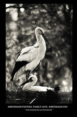 Photograph - Amsterdam Posters. Family Love. Amsterdam Zoo by Jenny Rainbow