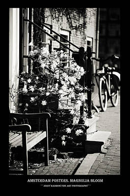 Photograph - Amsterdam Posters. Magnolia Bloom by Jenny Rainbow