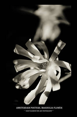 Photograph - Amsterdam Posters. Magnolia Flower by Jenny Rainbow