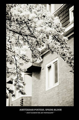 Photograph - Amsterdam Posters. Spring Bloom by Jenny Rainbow