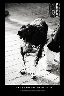 Photograph - Amsterdam Posters. The Eyes Of Dog by Jenny Rainbow