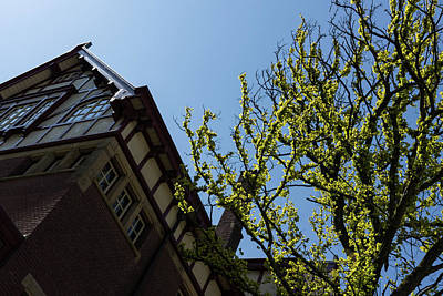 Photograph - Amsterdam Spring - Characteristic Facade Plus Unusual Tree - Right by Georgia Mizuleva