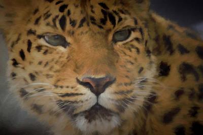 Leopard Digital Art - Amur Leopard Dp by Ernie Echols