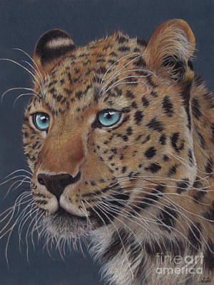 Drawing - Amur Leopard by Kathryn Whiteford