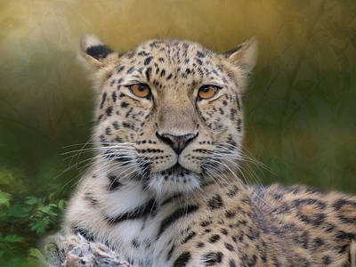Photograph - Amur Leopard by Patti Deters