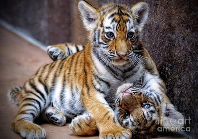 Amur Tiger Cubs Art Print