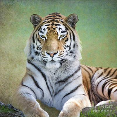 Photograph - Amur Tiger by Heiko Koehrer-Wagner