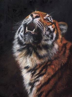 Painting - Amur Tiger Looking Up by David Stribbling