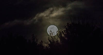 Photograph - Amy Blue Moon by Brian MacLean