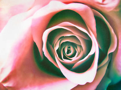 Photograph - An Absolute Rose by Colleen Kammerer