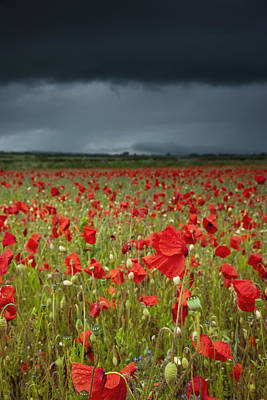Ground Level Photograph - An Abundance Of Poppies In A Field by John Short