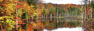 Photograph - An Adirondack Pond by David Patterson