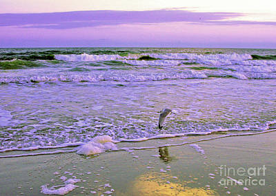 Photograph - An Afternoon Gull Glide 2 by Lydia Holly