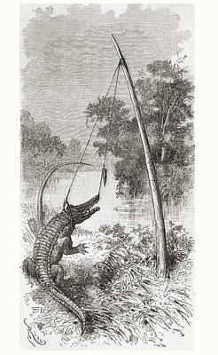 Alligator Drawing - An Alligator Trap On The Oyapock Or by Vintage Design Pics