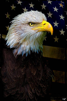 Birds Rights Managed Images - An American Icon Royalty-Free Image by Chris Lord