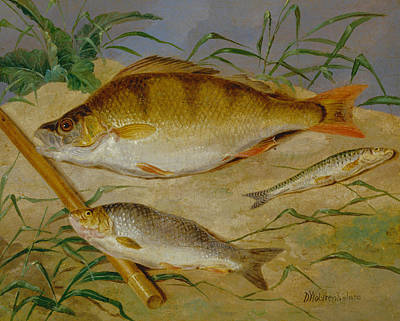 Painting - An Angler's Catch Of Coarse Fish by Dean Wolstenholme