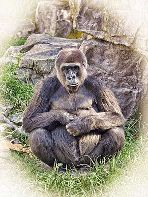 Photograph - An Ape In Deep Thought by Jim Fitzpatrick